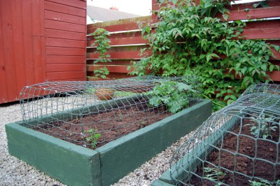 Cat-proof vegetable bed